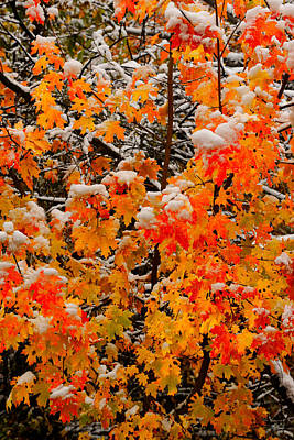 Limited Edition Photograph - Maple Glow Limited Edition by Greg Norrell