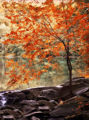 Maple Leaf Digital Art - Maple by Jessica Jenney