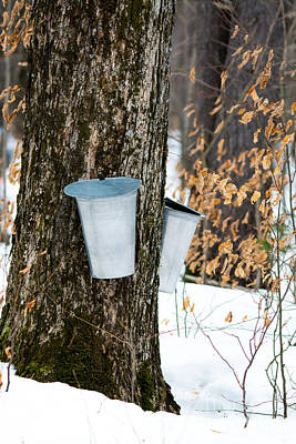 Maple Sap Collection Print by Cheryl Baxter