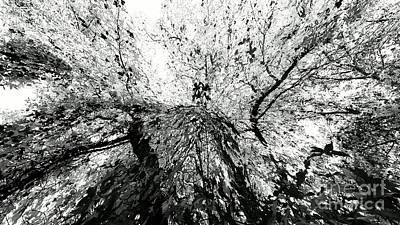 Photograph - Maple Tree Inkblot by CML Brown