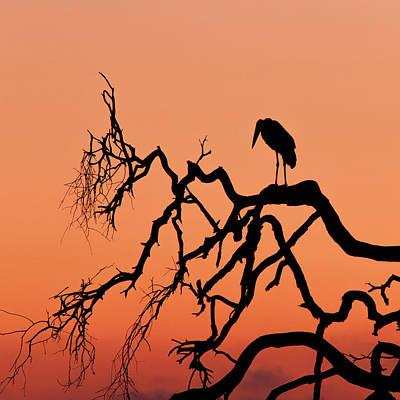 Marabou Stork At Sunrise Print by Babak Tafreshi