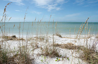 Marco Island Print by Margaret Pitcher