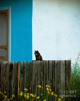 Squint Photograph - Marfa Cat by Sonja Quintero