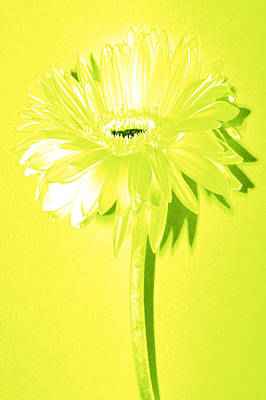 Bloody Mary Digital Art - Margarita Zinnia by Sherry Allen