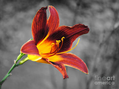 Red Photograph - Margo's Lily by Jai Johnson
