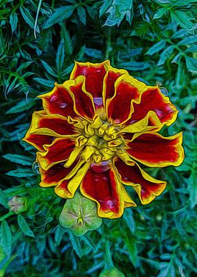Marigold 1 Print by Paul Gioacchini