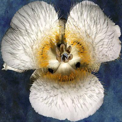 Mariposa Lily Two Print by Belinda Greb