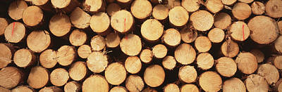 Large Group Of Objects Photograph - Marked Wood In A Timber Industry, Black by Panoramic Images