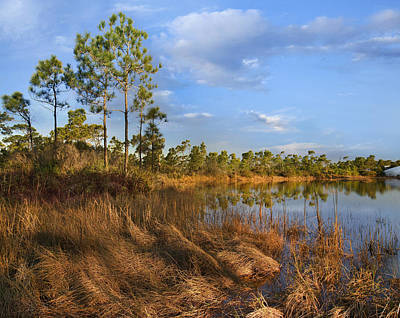 Wetlands Photograph - Marsh And Trees Saint George Isl Florida by Tim Fitzharris