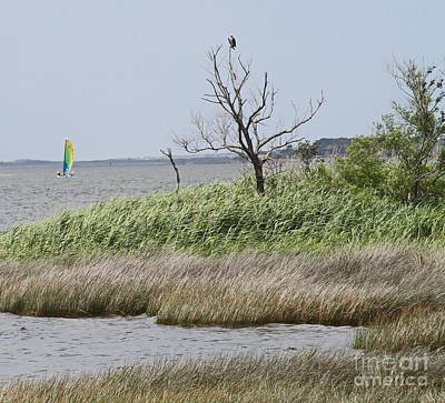 Water Photograph - Marsh With Boat And Osprey by Cathy Lindsey
