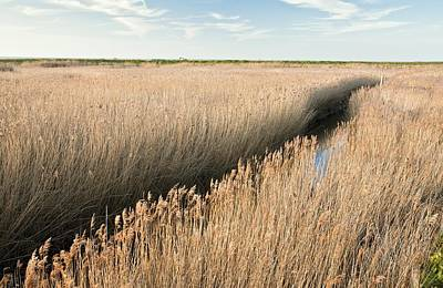 Marshland, Uk Print by Science Photo Library
