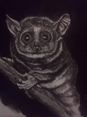 Marsupial Drawing - Marsi by Benjamin Perez