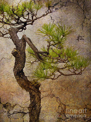 Bonsai Photograph - Matsu by Eena Bo