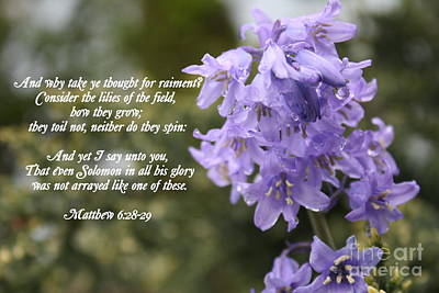Matthew 6 Verses 28 And 29 Print by Vicki Maheu