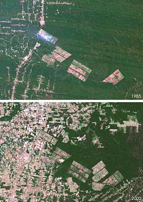 Matto Grosso Deforestation Print by Planetobserver