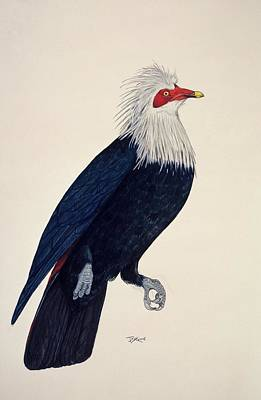 Mauritius Blue Pigeon Print by Julian Pender Hume/natural History Museum, London