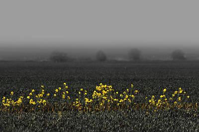 May Flowers And Fog Print by Svetlana Sewell
