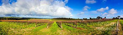 Vineyard Photograph - Mclaren Flat Vineyards  by Bill  Robinson