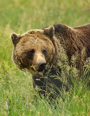 Hillman Photograph - Meadow Bear by Victoria Hillman