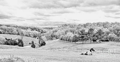 Meadow Bw Print by Chuck Kuhn
