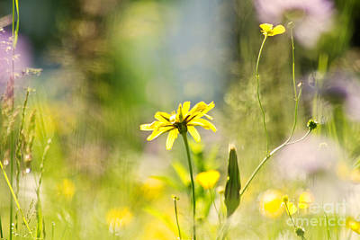 Outdoor Still Life Photograph - Meadow by Christine Sponchia