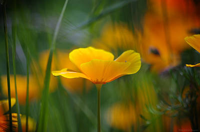 Meadow Gold Original by Philippe Meisburger