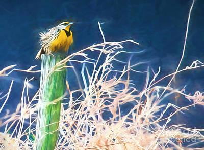 Meadowlark Digital Art - Meadowlark by Steve Bailey