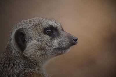 Meerkat Photograph - Meerkat 10 by Ernie Echols