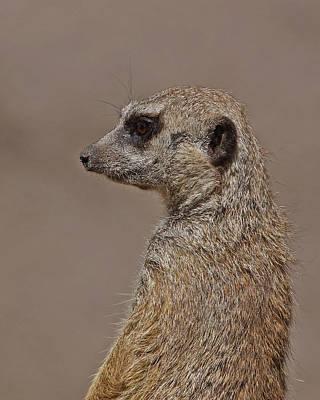 Meerkat Photograph - Meerkat 11 by Ernie Echols