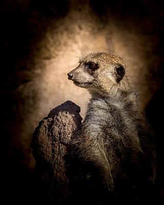 Meerkat Photograph - Meerkat 12 by Ernie Echols