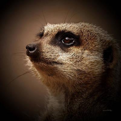 Meerkat Photograph - Meerkat 6 by Ernie Echols