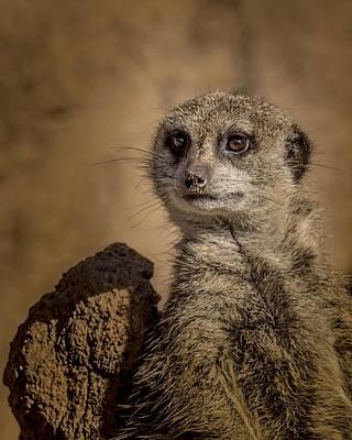 Meerkat Photograph - Meerkat by Ernie Echols
