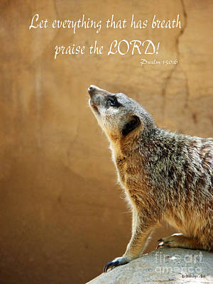 Meerkat Digital Art - Meerkat Praise by Methune Hively
