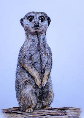 Meerkat Drawing - Meerkat by Tricia Winwood