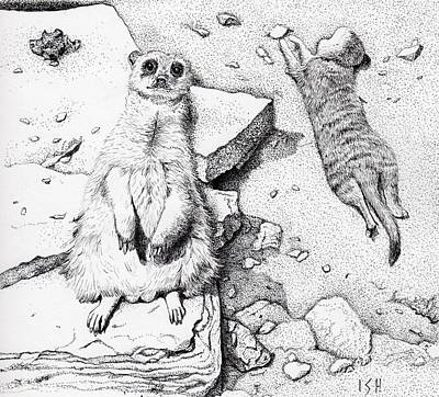 Meerkat Drawing - Meerkats by Inger Hutton