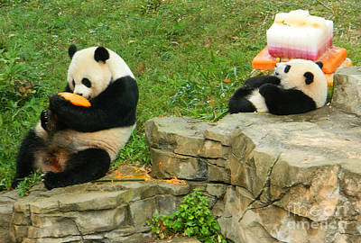 Mei Xiang And Bao Bao In Celebration Print by Emmy Marie Vickers
