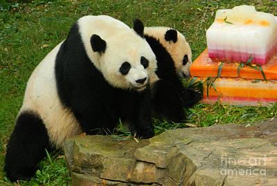 Mei Xiang And Bao Bao The Pandas Print by Emmy Marie Vickers