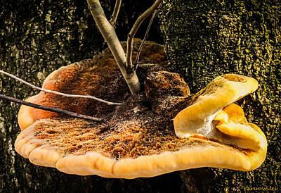 Mellow Mushroom Print by Karen Wiles