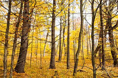 Autumn Photograph - Mellow Yellow by Cheryl Baxter