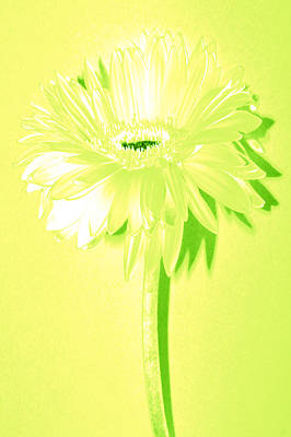Bloody Mary Digital Art - Melon Ball Zinnia by Sherry Allen