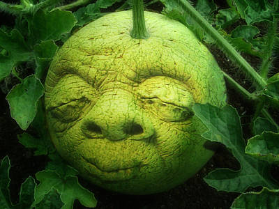 Watermelon Digital Art - Melon Head by Jack Zulli