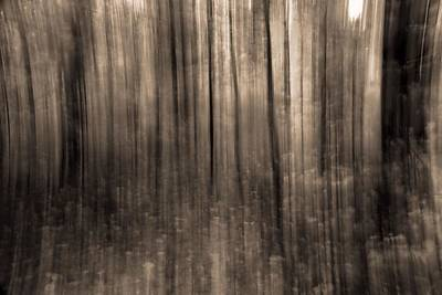 Forest Floor Photograph - Melting Forest by Dan Sproul