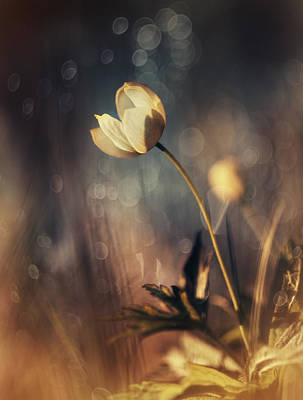 Flower Photograph - Memories Of Daylight by Magda  Bognar