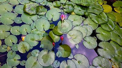 Designers Choice Photograph - Memories Of Monet by Barbara Chichester