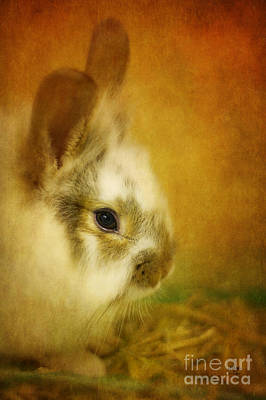 Fuzzy Digital Art - Memories Of Watership Down by Lois Bryan