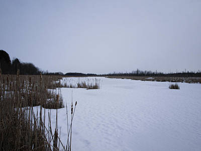 Mer Bleue Bog In The Wintertime Print by Philip G