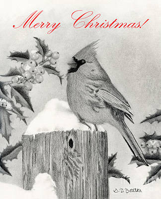 Cardinal Drawing - Cardinal And Holly- Merry Christmas Cards  by Sarah Batalka