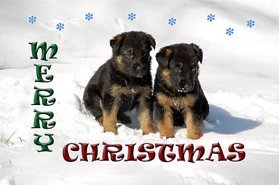 Puppy Photograph - Merry Christmas Puppies by Aimee L Maher Photography and Art Visit ALMGallerydotcom