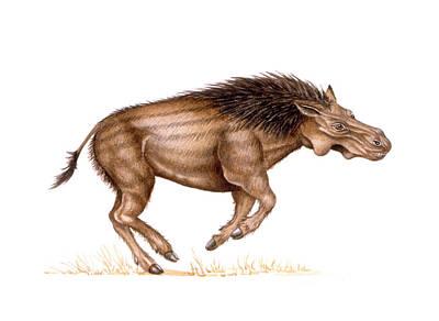 Metridiochoerus Prehistoric Pig Print by Deagostini/uig