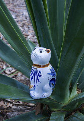 Tequila Photograph - Mexican Agave Cat by William Patrick
